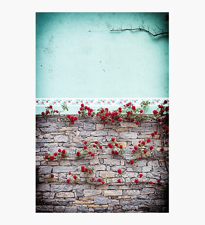 Roses on a wall Photographic Print