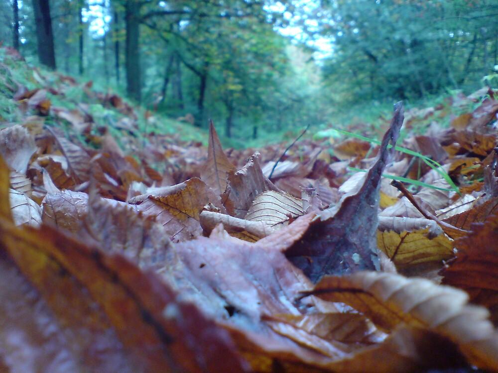 Amongst Leaves by DanGoodwin