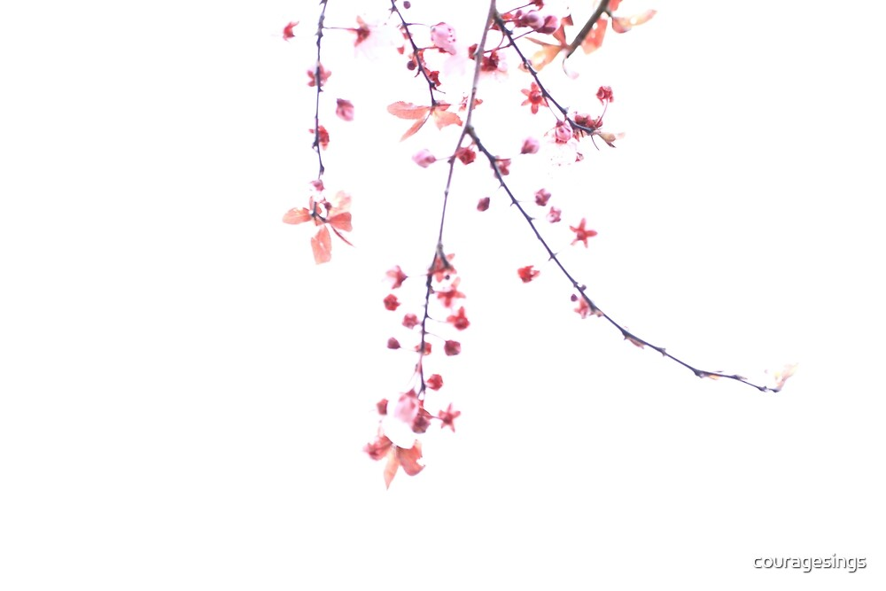 Cherry Blossom Minimalism by couragesings