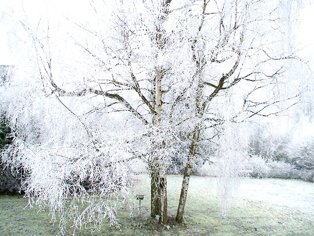 winter wonderland by SherriS