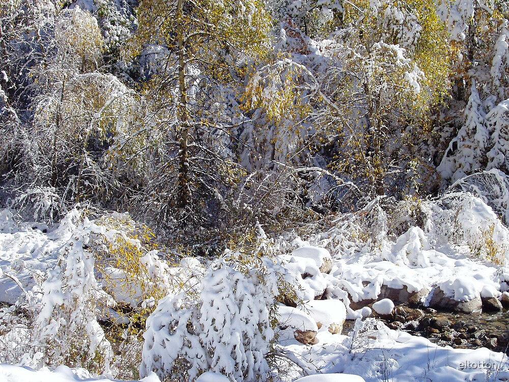 October Snows in the Canyon by eltotton