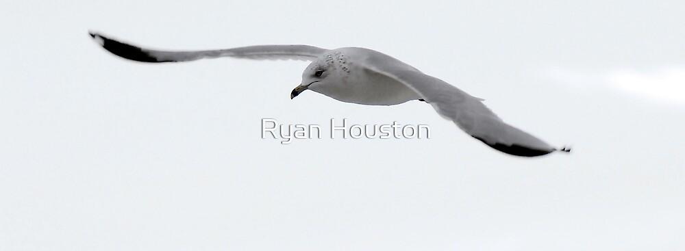 Seagull Gliding by Ryan Houston
