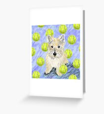 Miss Caroline the Cairn Terrier is Obsessed About Fetching Tennis Balls Greeting Card