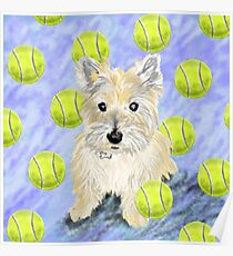 Miss Caroline the Cairn Terrier is Obsessed About Fetching Tennis Balls Poster