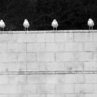 on a wall by M.  Photography