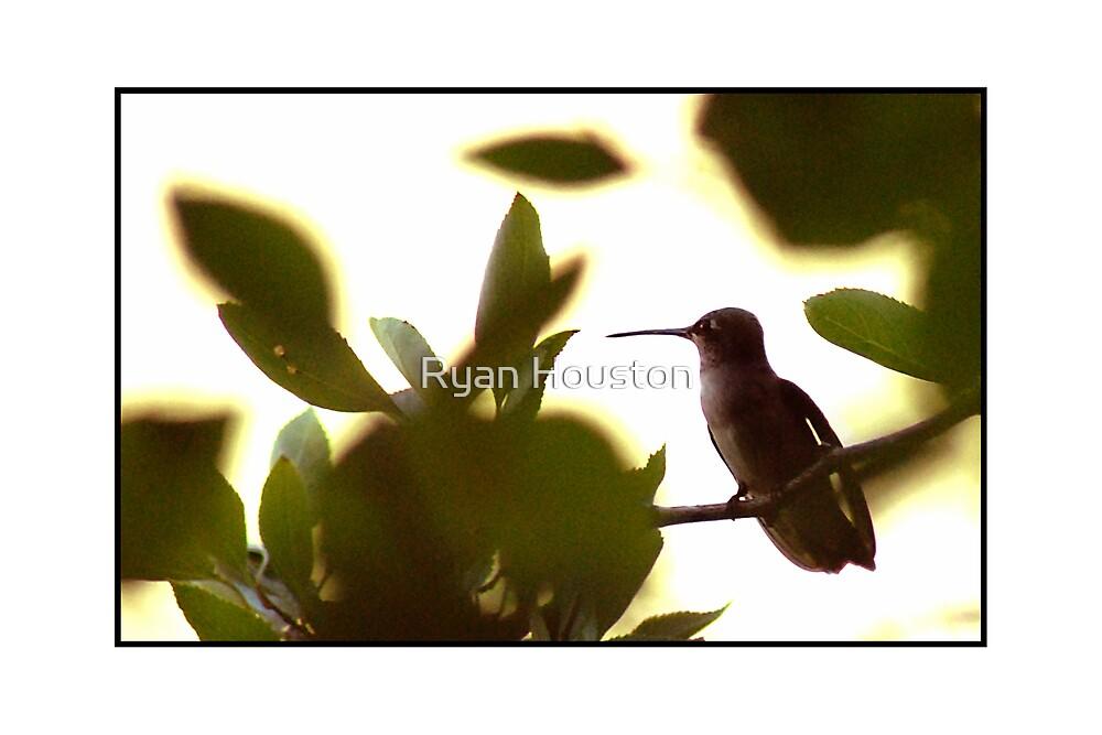 Hummingbird Solitude by Ryan Houston