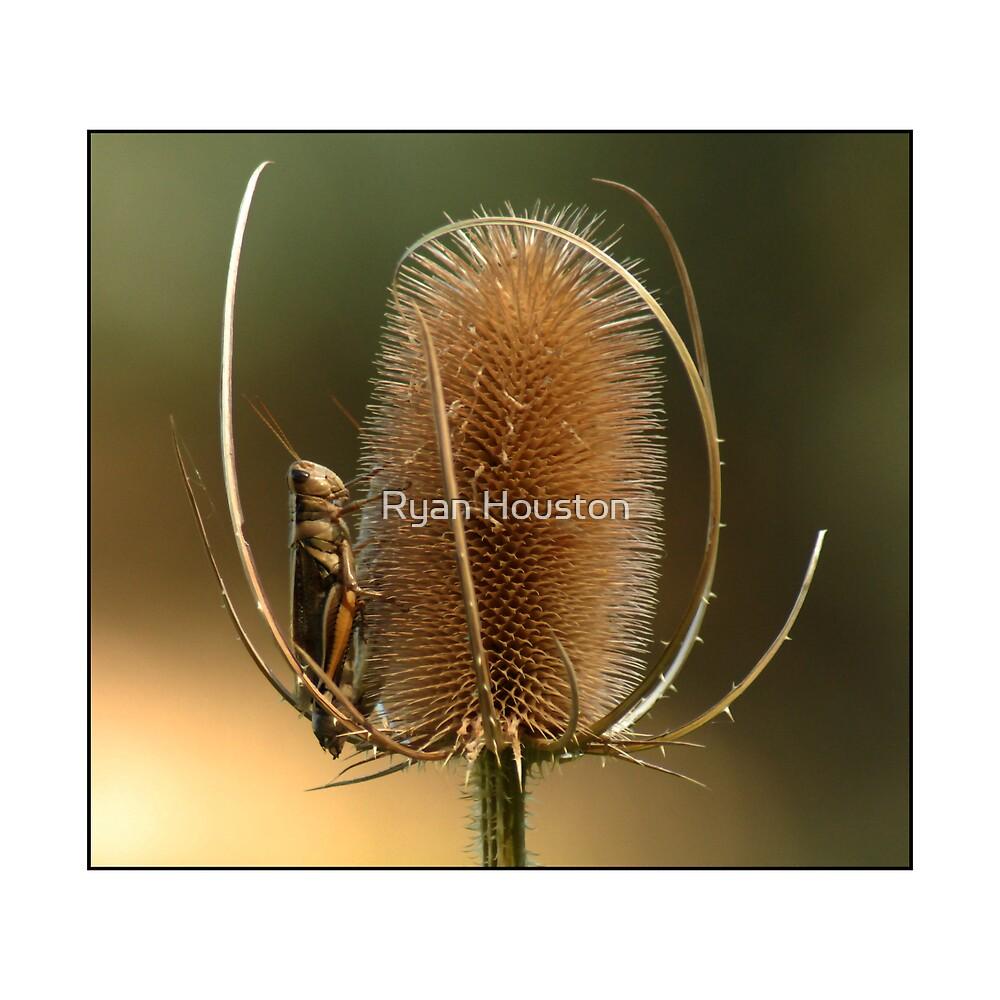 Grasshopper Repose by Ryan Houston