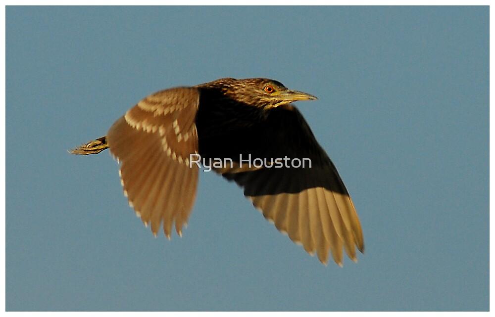 Heron in Flight by Ryan Houston