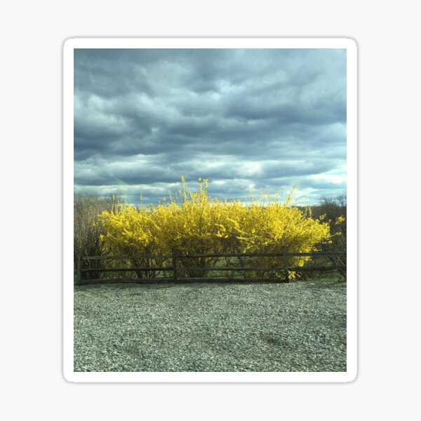 Yellow & Sky (Cropped) Sticker