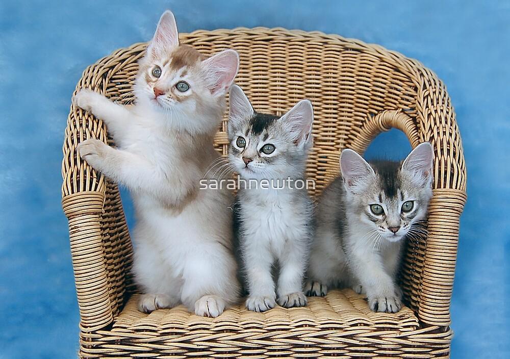 Cat Triangle by sarahnewton