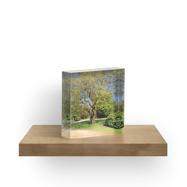 Oak by burramys