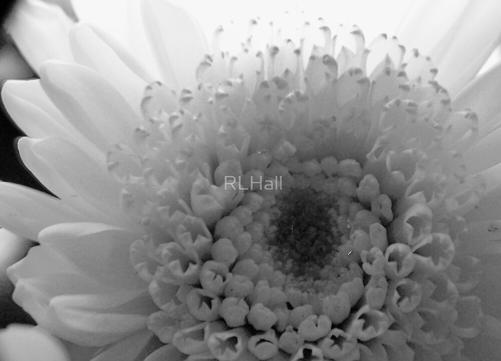 Pearly White by RLHall