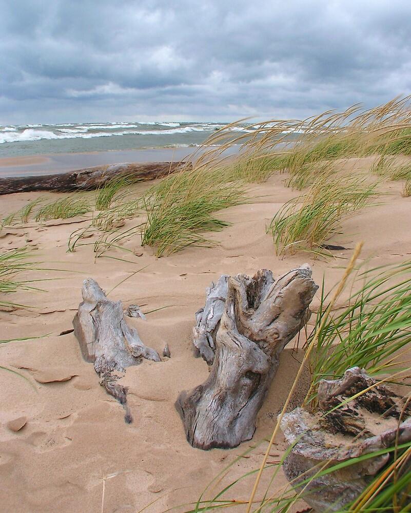 Windy Michigan Beach by Brion Marcum