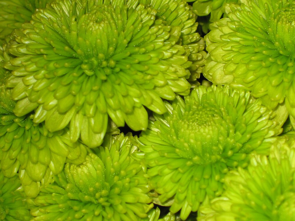 Green Flower by colleen