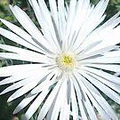 Wonderful White by KazM