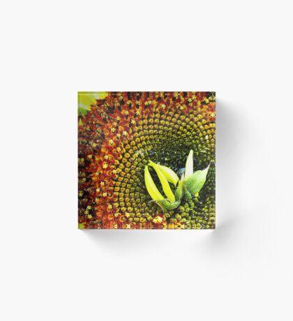 Center Madness Sunflower Acrylic Block