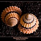 Beaded Periwinkles II by Clarissa Stuart