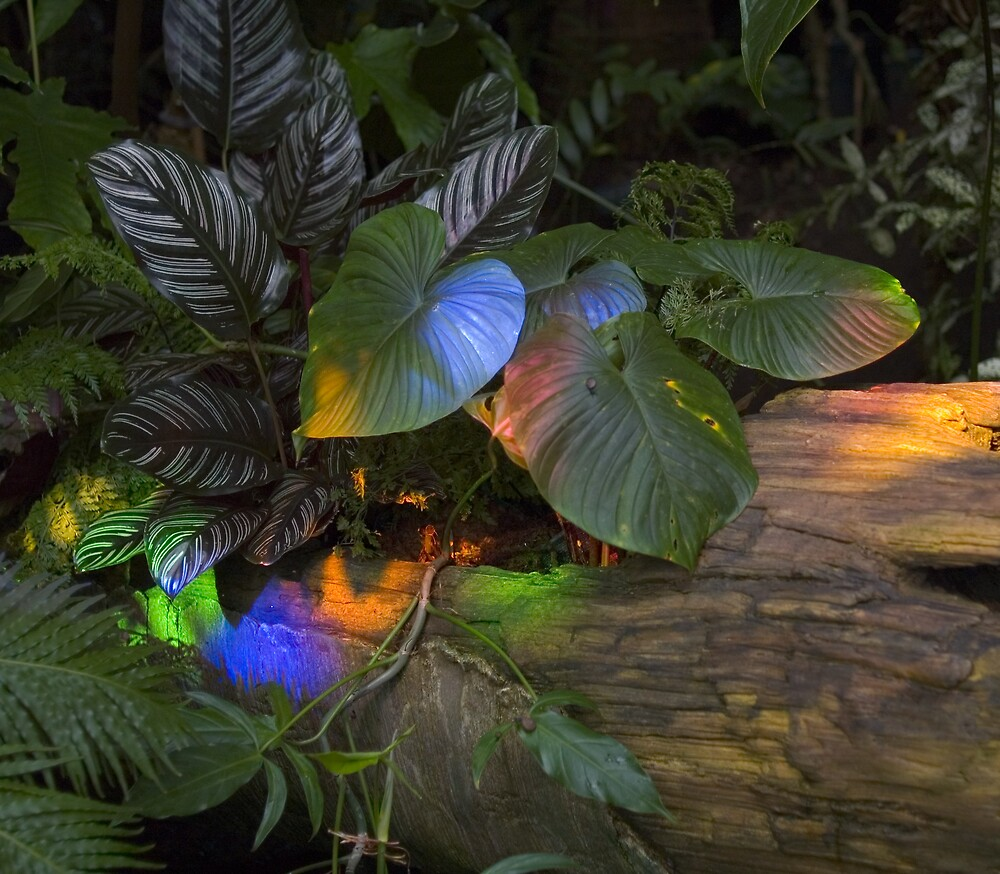 stained plants by Richard Soderberg