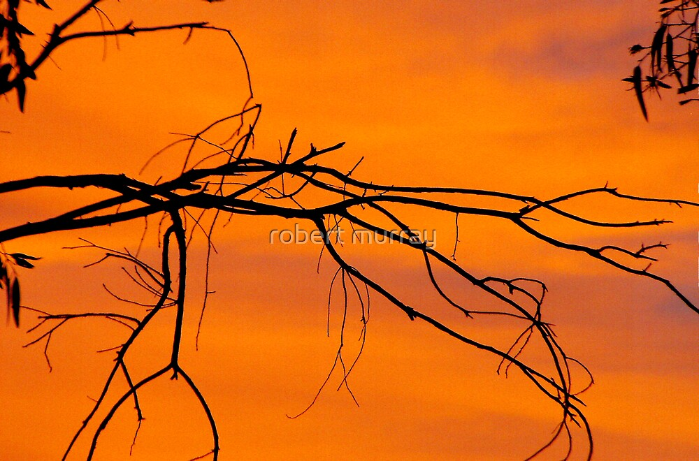 twigs by robert murray