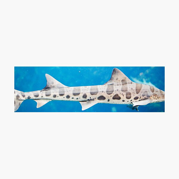 fins behind glass Photographic Print