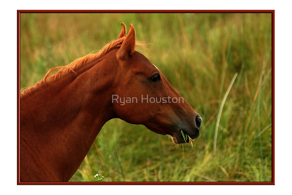 Grazing Red Horse by Ryan Houston