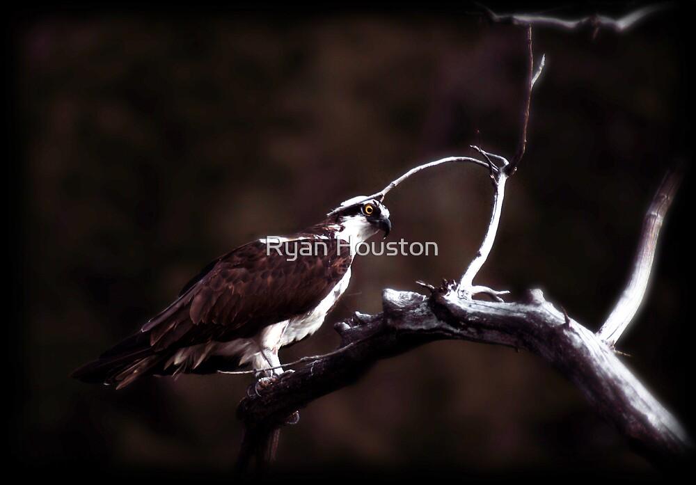 Wet Osprey by Ryan Houston