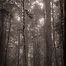 Lost in the Forest II by Clare Colins