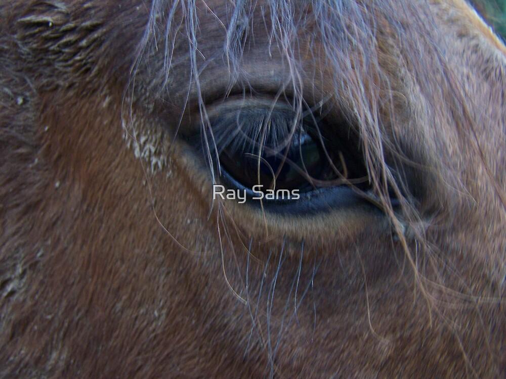 A Kind Eye by Ray Sams