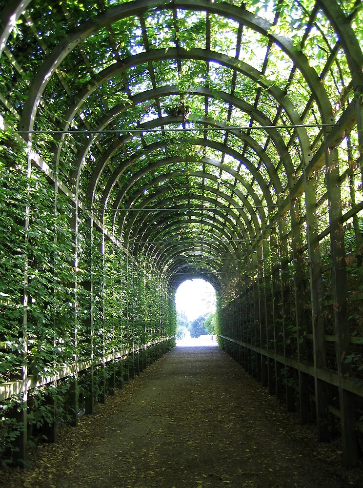 Vine Tunnel by Natalia