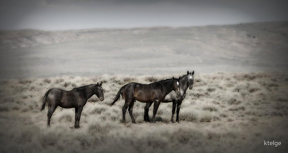 Wild Horses by ktelge