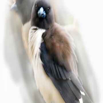 love birds by craig123