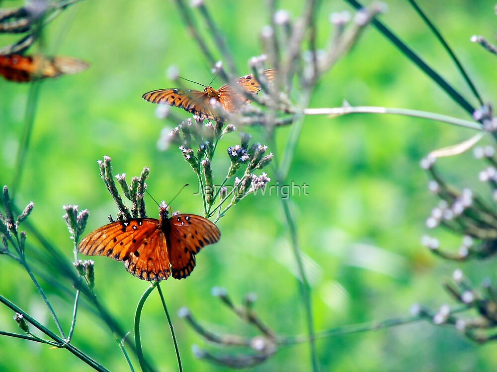 Butterflies I by Jenny Wright
