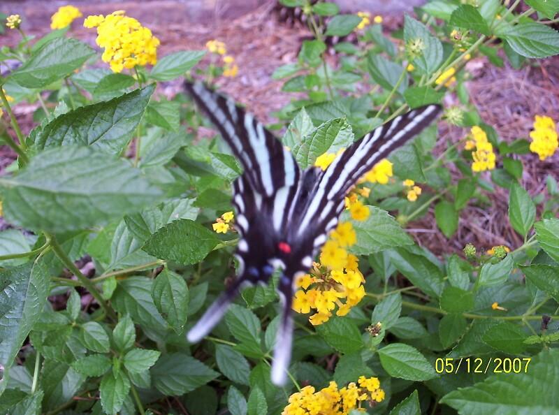 Beauty of a Butterfly by 116hebert