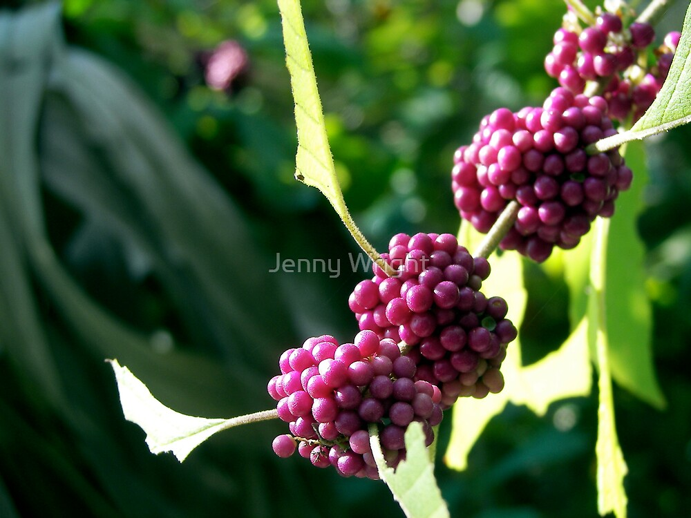 Wild Berries by Jenny Wright