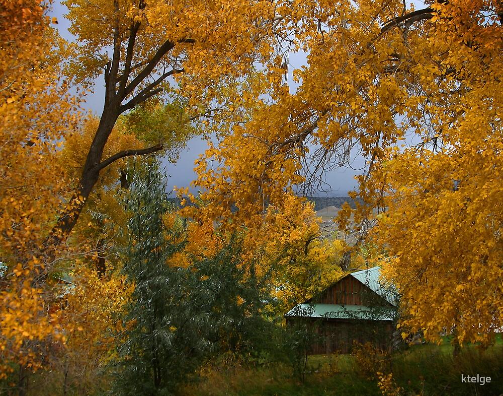 Framed in Fall by ktelge