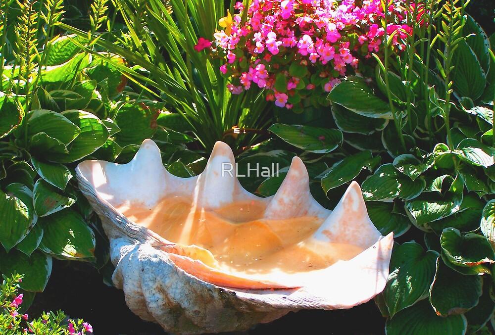 Seashell Birdbath by RLHall