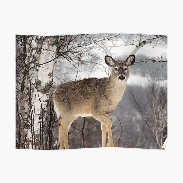 Deer in Headlights Poster