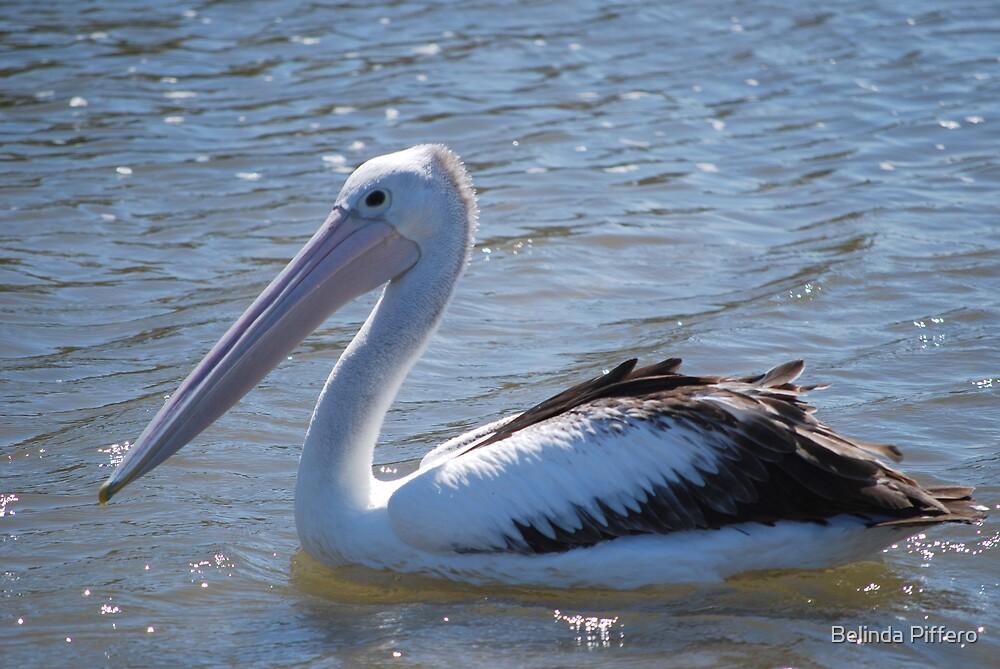 Pelican by Belinda Piffero