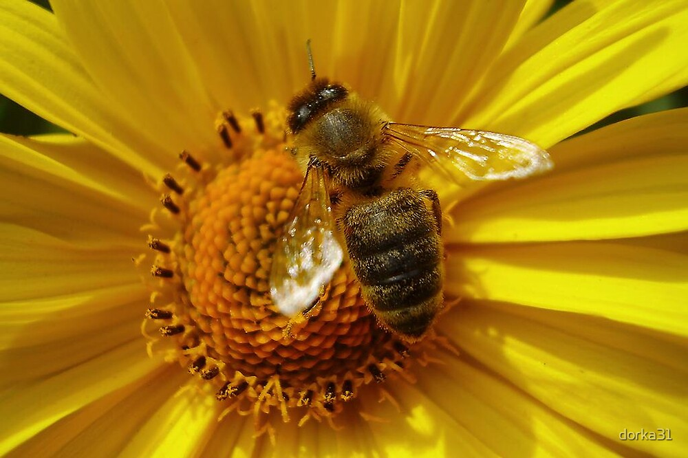 busy bee by dorka31