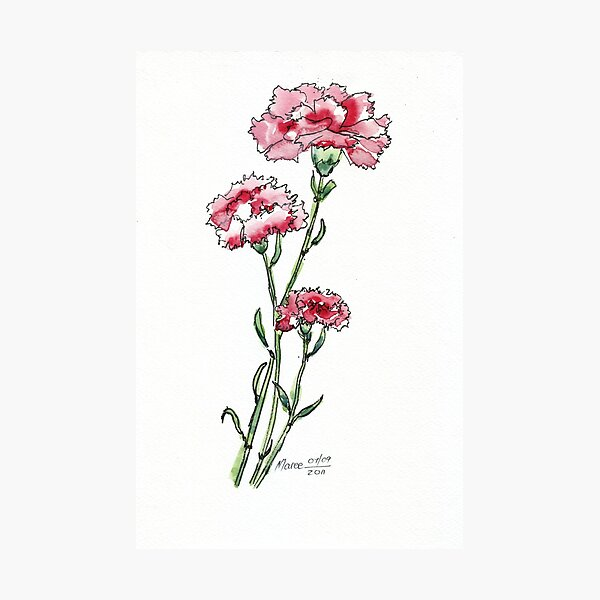 And a Pink Carnation... Photographic Print