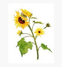 Gelbe Sonnenblume Aquarellmalerei Fotodruck