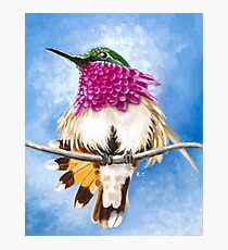Costa's Hummingbird perched on the branch Photographic Print