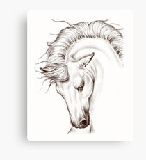 Andalusian Horse Drawing Canvas Print