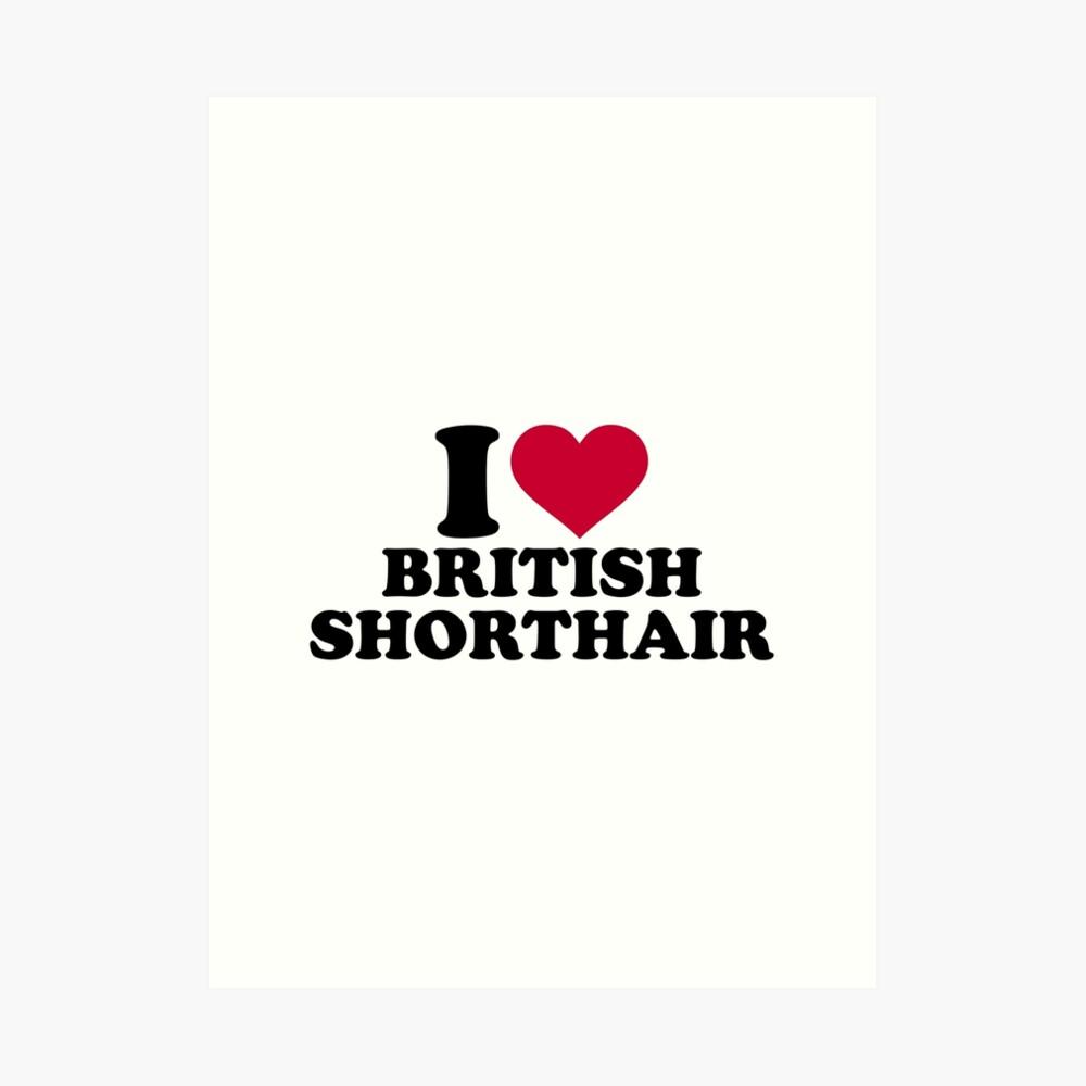 Amo British Shorthair Lámina artística