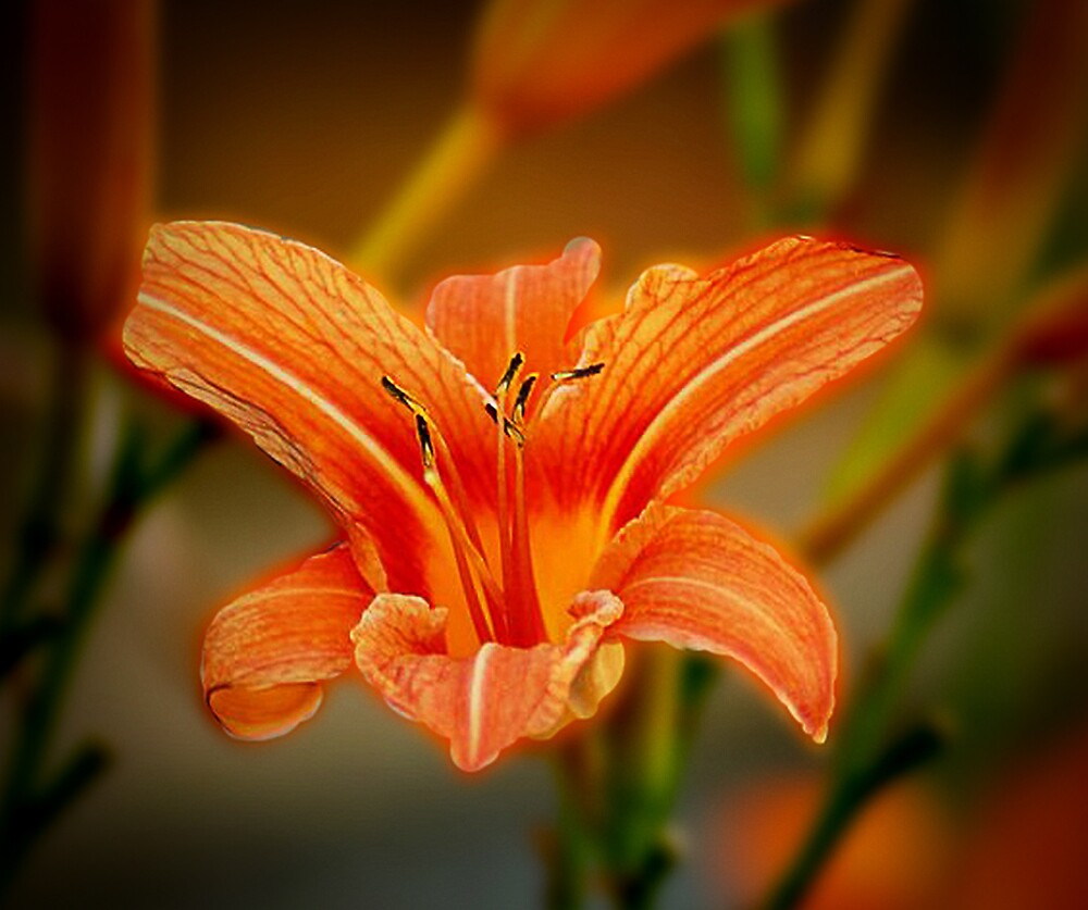 Orange by blutat2