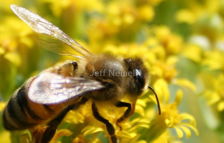 Busy As A Bee by Jeff Newell