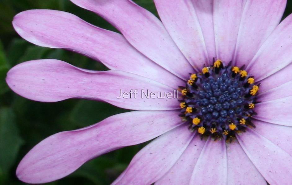 Dressed in Pink by Jeff Newell