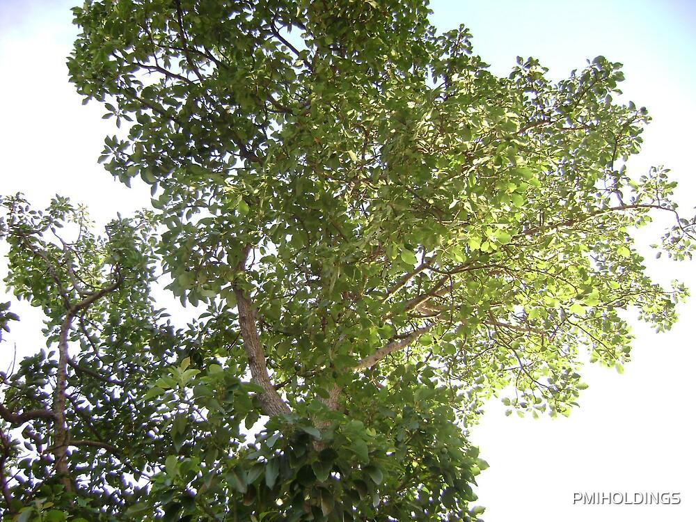 Flying tree by PMIHOLDINGS