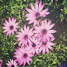Flowers by Asrais
