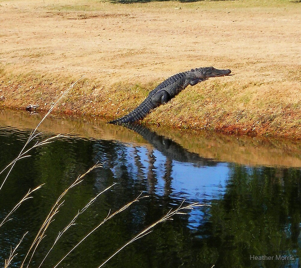 The Gator by Heather Morris